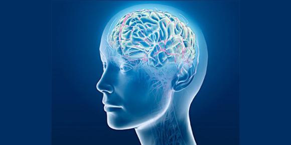 Brain _Mental Health