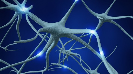 nerve cells 1