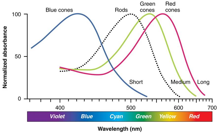 color-wavelength