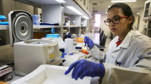 Testing: A lab worker performs a mosquito DNA analysis in a lab in Recife, Brazil as the country tries to allay fears of ...